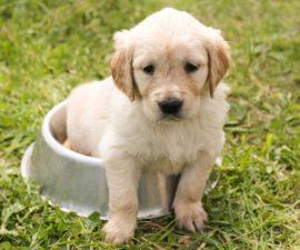 deployment through puppy gifs